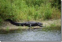 Gator-5