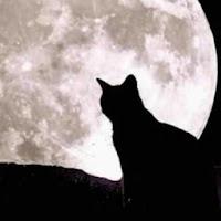 Moon Tomcat avatar