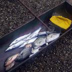 El oficio de pescador