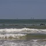 02-07-15 Corpus Christi & South Padre Island - _IMG0463.JPG