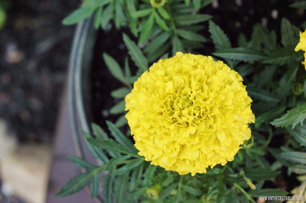 [flower8%5B10%5D]