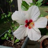 Gardening 2011 - 100_7485.JPG