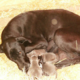 Star & True Blues February 21, 2008 Litter - HPIM0886.JPG