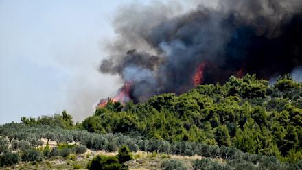 Δύο πυρκαγιές βρίσκονται σε εξέλιξη σε Αρκαδία και Λακωνία