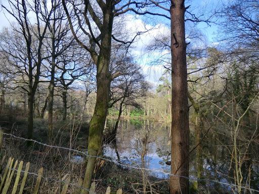 CIMG5438 Pond at Broomland Wood