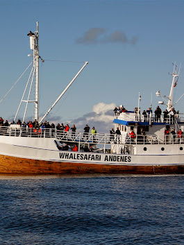 Dancing With Whales In Norway This Summer - Hurtigruten Launches New Whale Wa...