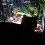 Fish - IMG_20121230_181617.jpg