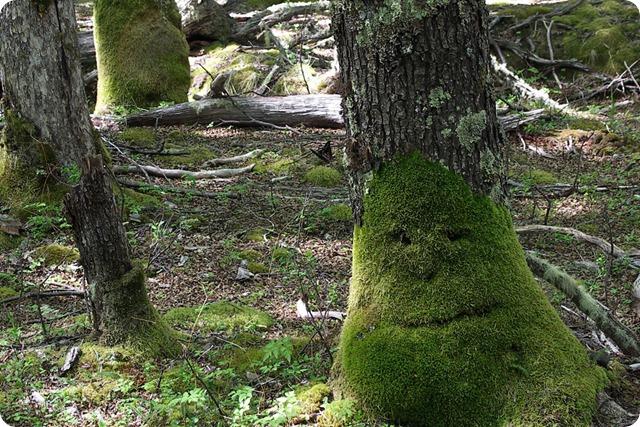 el-chalten-forest-face2-1000