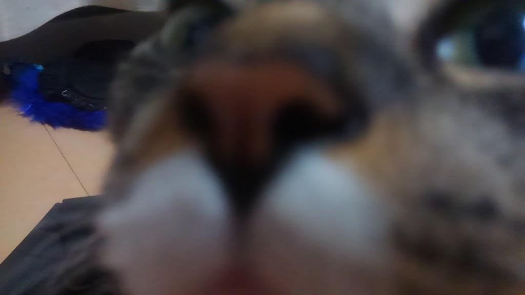 猫の鼻(アップ)