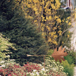 images-Seed and Sod-trees_c11.jpg