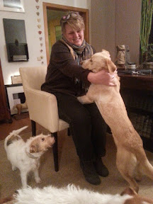 Goldie CMFA - Rehomed Germany