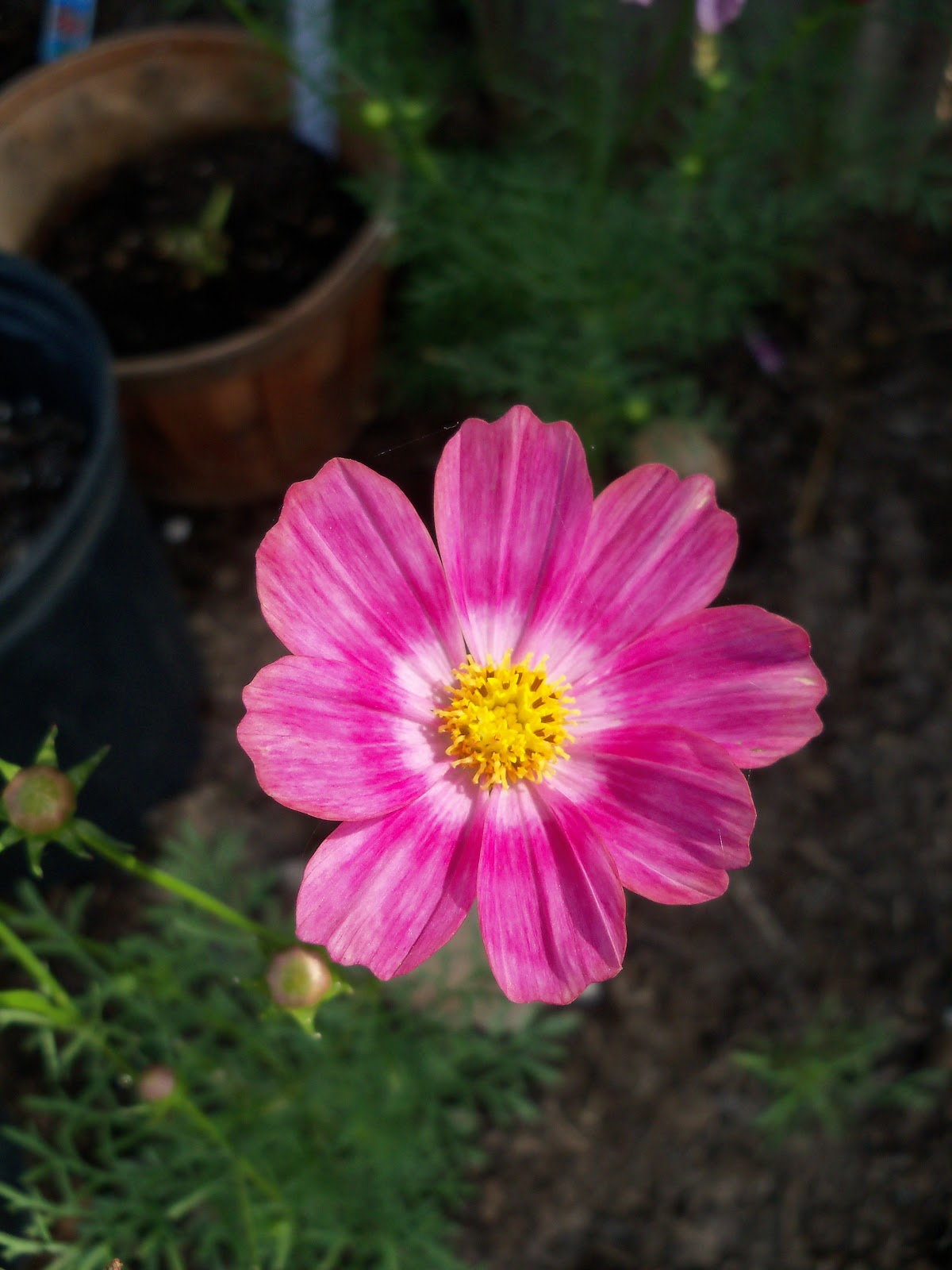 Gardening 2010, Part Two - 101_1880.JPG