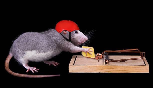 Tips Mengusir Tikus Dari Rumah