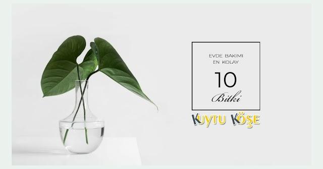 Evde Yetiştirilebilecek En Kolay 10 Bitki