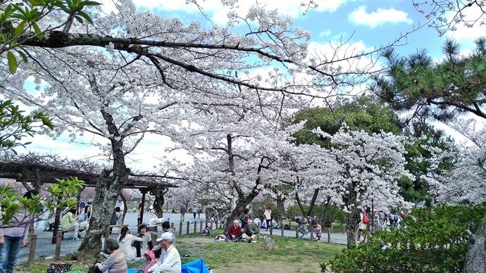 11 京都 嵐山渡月橋 賞櫻 櫻花 Saga Par 五色霜淇淋 彩色霜淇淋