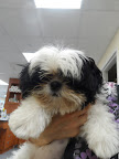 Bella-Hood-dog-veterinarian-Derry-spayFB.jpg