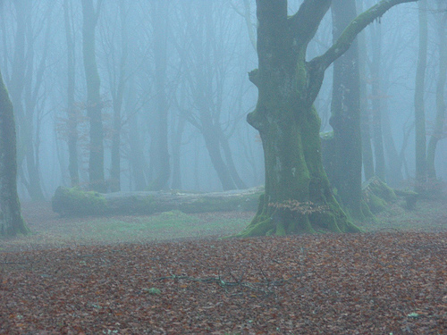 Image credit: Forest on a Foggy Winter Day: photo by follc via PhotoRee