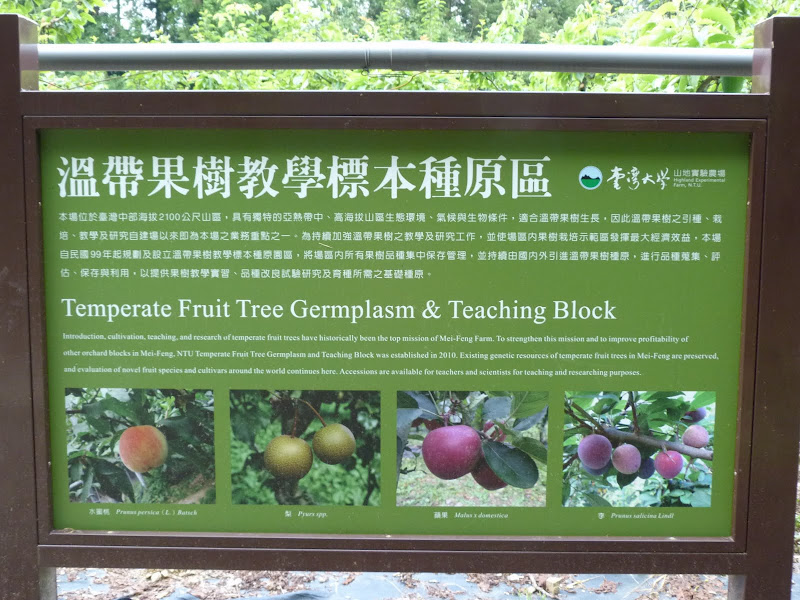 TAIWAN Dans la region de Wushe,au centre - P1140068.JPG