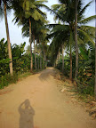 Driveway to Tapovan line by Coconut Palms