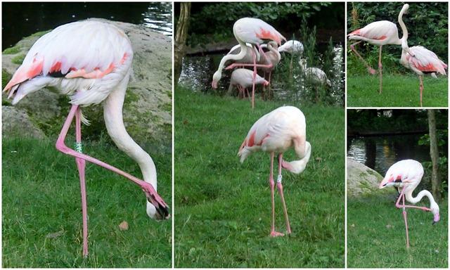 2016-07-20 flamingoes