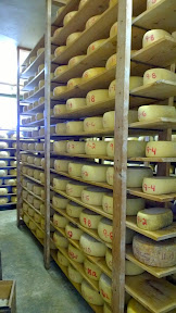 St Jorge Cheese in the aging room of Matos Cheese Factory in Sonoma