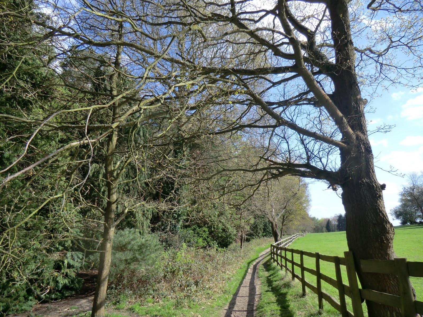 CIMG0524 Beech Hill