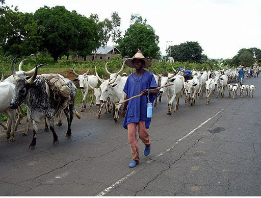 'Armed Fulani Herdsmen Should Be Declared Terrorists'- Itse Sagay