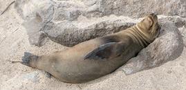 Ecuador-Galapagos-SeymourRabida-180218-0010-ToWeb