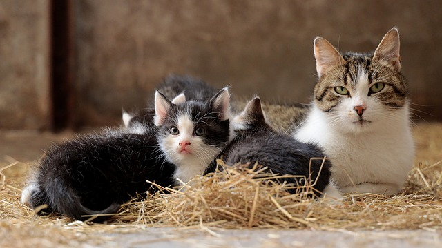 puppies and kitties can get worms during breastfeeding