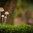 Shelly Wason - Google+ - Another mushroom Family Portrait This one is representative…