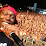 Dizzee Rascal's profile photo