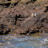 galapagos - Galapagos_FB-133.jpg