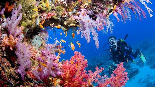 Exploring Coral Reef, Sanganeb, Sudan.jpg