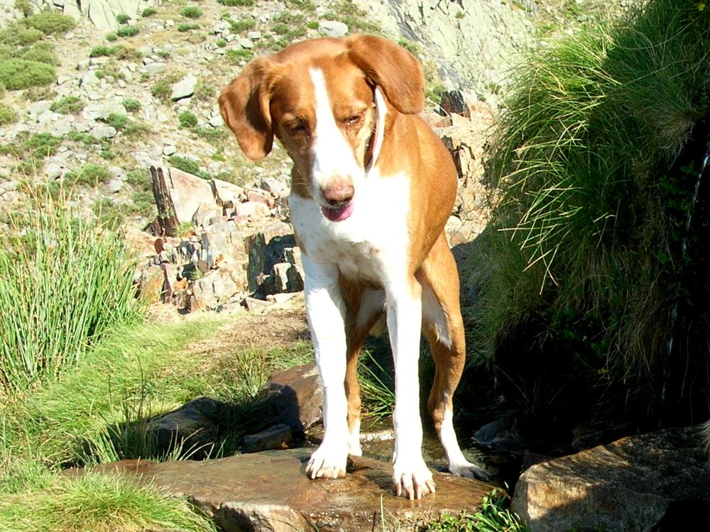 2009 · Galayos, en la Fuente Macario