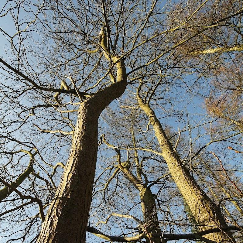 Stowe_Trees_04.JPG