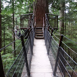 treetops at the Capilano Suspension Bridge in North Vancouver, British Columbia, Canada
