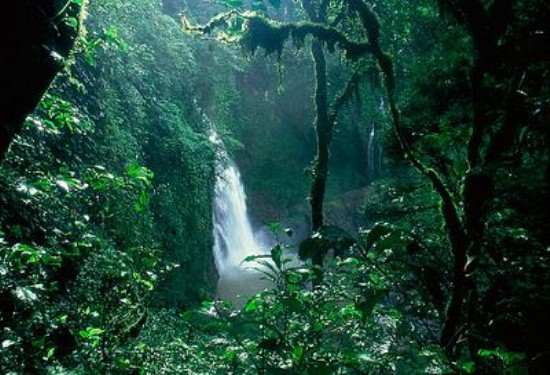 Amazónia Peruana