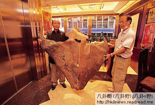 甘健成(左)負責設計鏞記菜式,他亦四處搜羅刁鑽食材,如這塊大龍躉皮。 <br><br>(《飲食男女》圖片)
