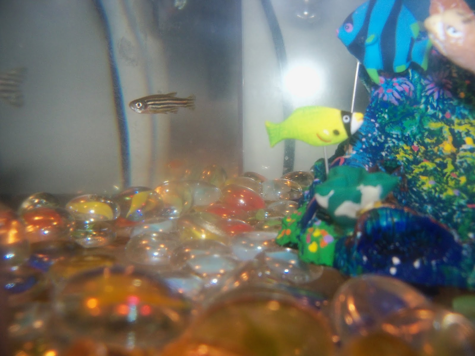 Fish - 101_1789.JPG