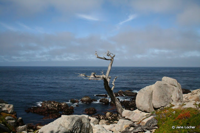2010 - SLR_0027_17_Mile_Drive_Ghost_Tree.JPG