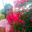 Yesika Lucena's profile photo