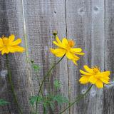 Gardening 2011 - 100_8075.JPG