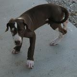 Jasper- born on 4/2/2010 - IMG_1427.JPG