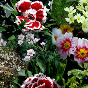 by Branka Radmanić - Flowers Flower Gardens