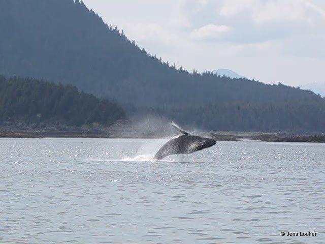 2009 - Whale2.jpg