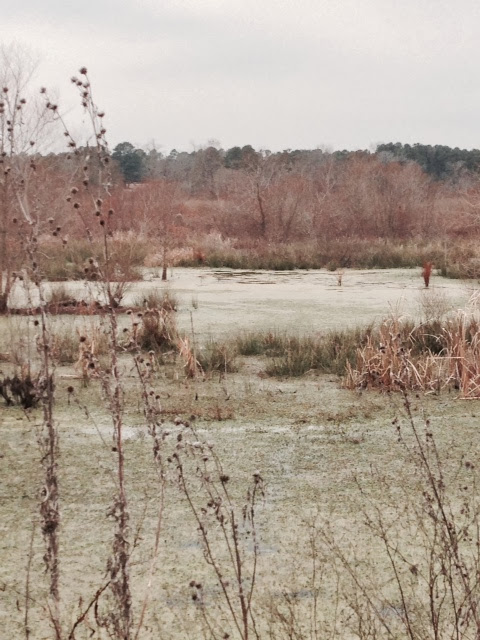 Anderson Creek Hunting Habitat - photo33.JPG