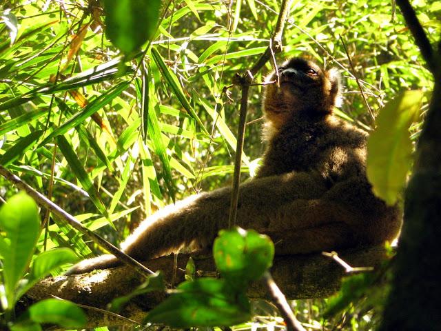 صور من مدغشقر Madagascar 14867848430