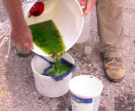 Photo: Processing a light bucket trap sample