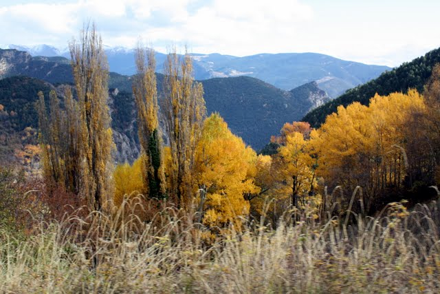 Autumn leaves in Andorra