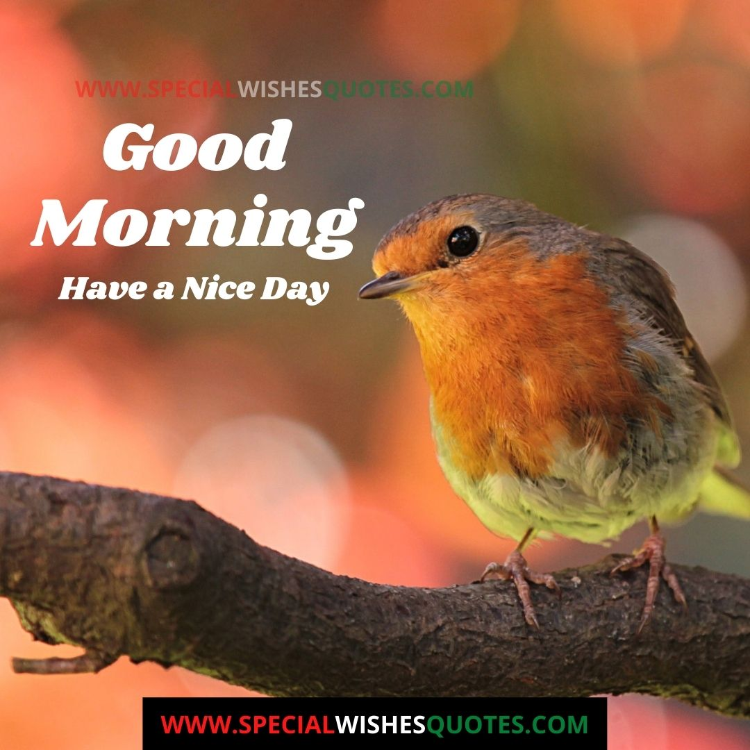 good morning have a nice day photo